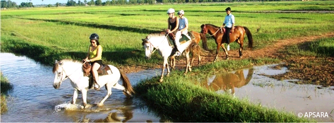 Horse riding in the countryside – image 1