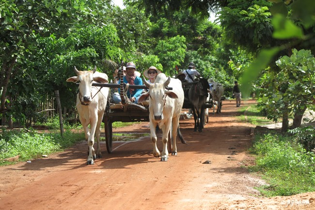 Ride an ox cart – image 1